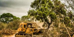 Protección ambiental Josefina Mendoza