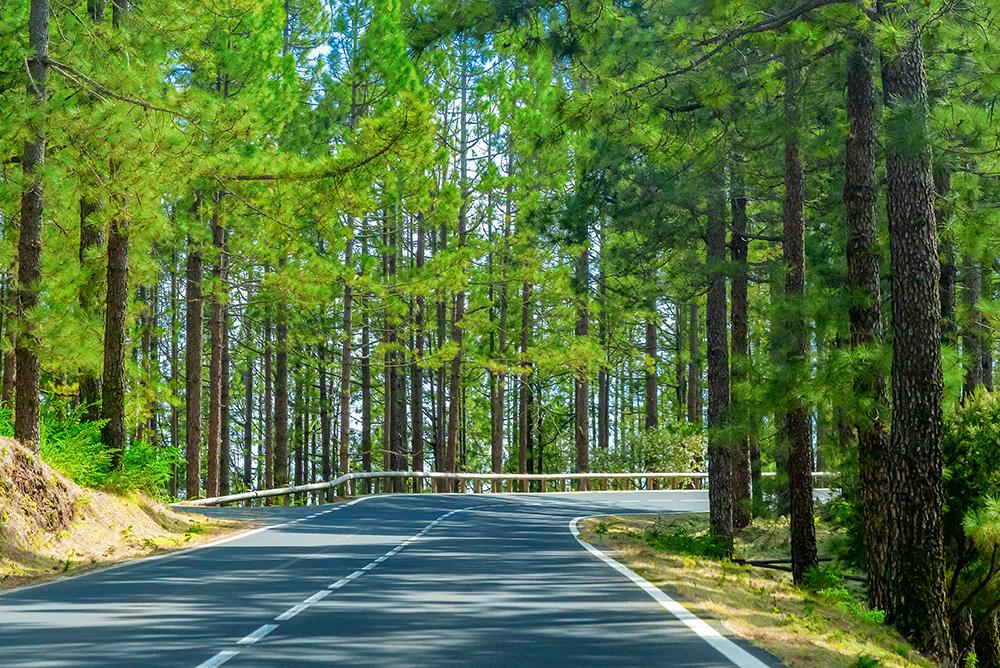 Proyecto de Ley: Plan Nacional de Forestación Josefina Mendoza